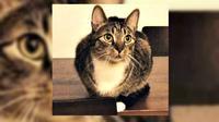 Seekor kucing hilang dicari-cari bahkan dengan hadiah uang yang nilainya menggiurkan. Siapakah sang kucing ini?
