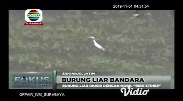 Burung liar yang berada di area Bandara International Juanda, Sidoarjo Jawa Timur diusir oleh mobil khusus pengusir burung oleh petugas patroli bird strike.