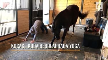 Aksi lucu seekor kuda melakukan gerakan yoga setiap hari di waktu pagi.