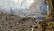 Kebakaran hutan di sebuah titik di Kalimantan Tengah. (dok BNPB)