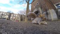 Seperti apa aksi pencurian yang dilakukan si tupai? Saksikan video berikut ini.