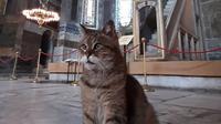 Kucing Gli merupakan penghuni Hagia Sophia yang cukup lama (Dok.Instagram/@hagiasophiacat/https://www.instagram.com/p/CCWHABDAgsc/Komarudin)