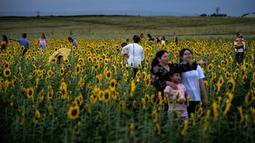 Orang-orang berpose untuk foto dengan  bunga matahari di ladang bunga Nokesville, Virginia pada Kamis (22/8/2019). Disana, bunga matahari dengan kembang berwarna kuningnya nan cantik terhampar di ladang luas. (Photo by Brendan Smialowski / AFP)
