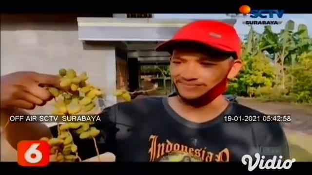 Wahyu Eko Widodo, warga Ponorogo, Jawa Timur, membagikan buah kurma muda yang tumbuh di halaman rumahnya secara gratis, hampir setiap hari, buah kurma muda dari pohon yang sudah berusia 14 tahun ini dipetik untuk dibagikan ke warga.