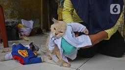 Seekor kucing menggunakan kostum dokter di rumah industri di Desa Jampang, Kabupaten Bogor, Selasa (8/12/2020). Fredi Lugina Priadi merancang kostum unik untuk kucing seperti baju dokter atau superhero dengan harga yang berkisar dari Rp38 ribu hingga Rp1,5 juta. (Liputan6.com/Herman Zakharia)