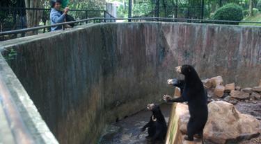 20170118-Beruang Kurus di Kebun Binatang Bandung-Jawa Barat