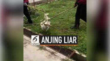 Seorang pria asal Malaysia mendadak viral akibat cuitannya di Twitter. Ia bercerita bahwa anjing yang dirawatnya mendapatkan perlakuan kejam sehingga mengakibat mulut anjing tersebut berdarah.