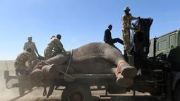Kenya Wildlife Service (KWS) mengangkut gajah menggunakan truk di Lamuria, Nyeri, Kenya, Rabu (21/2). Kenya memiliki ribuan gajah yang menghadapi ancaman pemburu gading dan kehilangan habitat. (AFP PHOTO/SIMON MAINA)