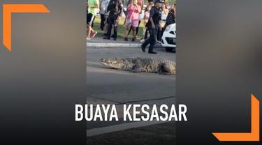 Seekor buaya mendadak muncul di tengah jalan raya dan membuat warga heboh. Lalu lintas juga terganggu dan menyebabkan kemacetan.