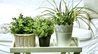 Ilustrasi tanaman hias (sumber: iStockphoto)