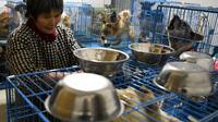 Wen Junhong (68) memiliki sebuah rumah dua lantai dan setiap kamar ditumpuk dengan sangkar anjing, kucing dan hewan lainnya (AFP)