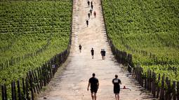 Peserta berlari melalui kebun-kebun anggur selama lomba lari Strongman Run di kota Paarl, Afrika Selatan, 13 Oktober 2018. Strongman Run pertama kali digelar di Munster, Jerman pada 2007 silam dan hanya diikuti prajurit militer. (RODGER BOSCH/AFP)