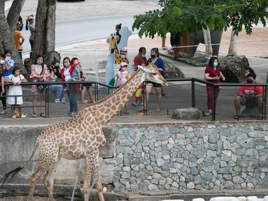 Para wisatawan mengunjungi Khao Kheow Open Zoo di Provinsi Chonburi, Thailand, Selasa (16/6/2020. Enam kebun binatang di Thailand akan kembali dibuka bagi pengunjung secara gratis mulai 15 hingga 30 Juni. (Xinhua/Zhang Keren)