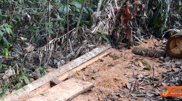 Citizen6, Asahan: Kawasan Hutan Lindung Tormatutung Asahan sudah beralih fungsi, dan kawasan sawit sudah rusak parah. (Pengirim: Tombak Nagara/Amir Dolok Saribu)