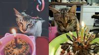Ulang Tahun Kucing