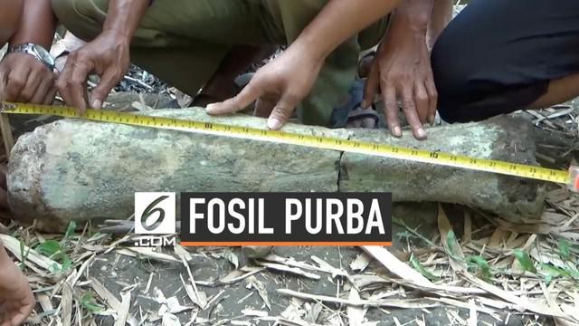 Seorang pencari pasir di Ngawi menemukan sebuah benda yang diduga tulang kaki gajah purba. Penemuan ini akan segera diberikan ke instansi terkait untuk dilakukan penelitian.