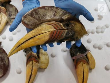 Petugas Direktorat Tindak Pidana Tertentu Bareskrim Polri menunjukkan barang bukti burung Julang Sulawesi di Bareskrim, Jakarta, Selasa (5/3). Polisi berhasil membekuk pelaku jual beli satwa dilindungi Julang Sulawesi. (Liputan6.com/JohanTallo)