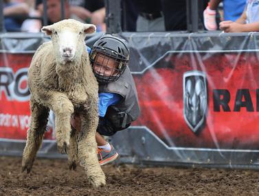 Serunya Anak-Anak Tunggangi Domba