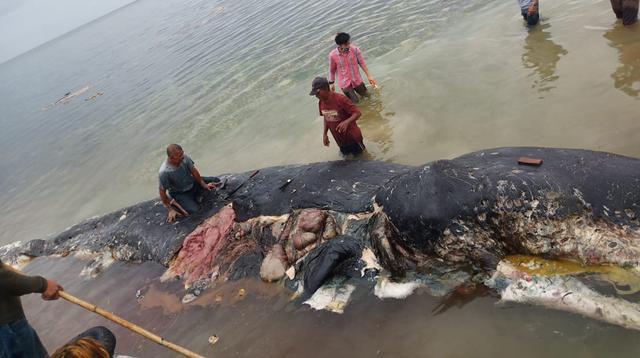 Petugas mengambil sampel dari bangkai paus sperma yang terdampar di perairan Wakatobi, Sulawesi Tenggara, Senin (19/20). Pada bangkai paus itu ditemukan 5,9 kg sampah, sebagian besar merupakan sampah plastik bahkan sandal jepit. (Liputan6.com/HO)