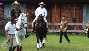 Ketua Umum Partai Gerindra Prabowo Subianto mengajak Presiden Joko Widodo (Jokowi) untuk naik kuda di kediamannya di Hambalang, Bogor, Senin (31/10). Jokowi dan Prabowo usai melakukan pertemuan tertutup selama hampir 2 jam. (Liputan6.com/Faizal Fanani)