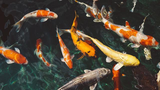 58 Contoh Hewan Pisces Beserta Gambar Terbaik