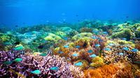 Perairan di gili ini memiliki taman bawah laut yang dihuni beragam jenis biota (sumber: agushoe.files.wordpress)