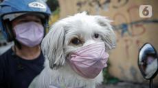 Seorang warga membawa anjing peliharaannya yang menggunakan masker di Jakarta, Selasa (12/5/2020). Masker yang dipasangkan oleh pemiliknya tersebut untuk melindungi anjing dari polusi udara serta mengantisipasi tertular virus corona COVID-19. (Liputan6.com/Faizal Fanani)