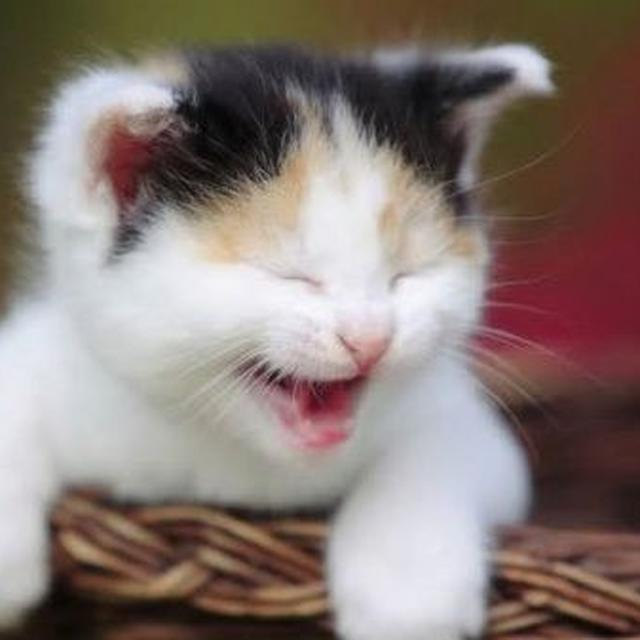 7 Meme Kucing Lucu Terkait Cinta Bikin Susah Nahan Tawa Ragam Bola Com