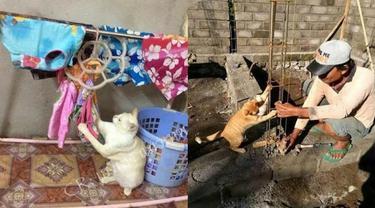 Kelakuan Kucing Lakukan Pekerjaan Rumah Ini Bak Manusia, Bikin Geleng Kepala