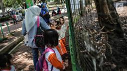 Sejumlah anak TK melihat rusa di Taman Marga Satwa Ragunan, Jakarta, Kamis (13/12). Kegiatan tersebut juga untuk memberikan wawasan kepada anak-anak betapa pentingnya mencintai satwa. (Liputan6.com/Faizal Fanani)