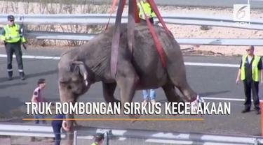 Seekor gajah mati dan dua lainnya luka-luka setelah truk yang mengangkut mereka terbalik di Albacete, Spanyol.