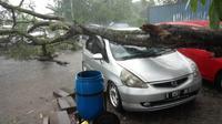 Mobil tertimpa pohon tumbang di Purwokerto. (Liputan6.com/Dok. Tagana BMS/Muhamad Ridlo)