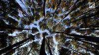 Suasana hutan pinus di Desa Wisata Kaki Langit Mangunan, Bantul, Yogyakarta (4/5). Desa Wisata Kaki Langit Mangunan yang baru berjalan hampir setahun ini dikelola warga setempat. (Merdeka.com/Arie Basuki)