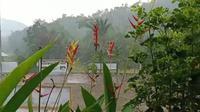 Hujan deras mengguyur Kalimantan Tengah pada Jumat (20/9/2019). (Dok Badan Nasional Penanggulangan Bencana/BNPB)
