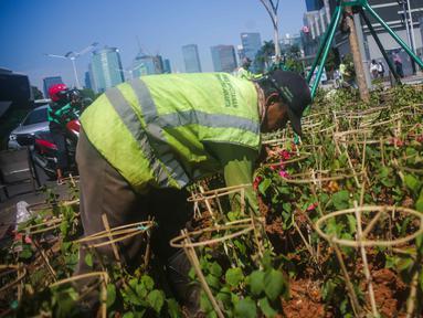 Petugas Dinas Kehutanan DKI Jakarta menanam tanaman hias bougenville di sepanjang Jalan Sudirman, Jakarta, Selasa (19/11/2019). Selain agar Jakarta semakin hijau dan lestari, penanaman tersebut juga untuk menekan polusi udara Ibu Kota. (Liputan6.com/Faizal Fanani)