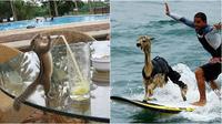 Hewan melakukan aksi tak terduga (Sumber: Brightside)