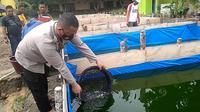 Kapolsek Rantau Alai Iptu Sondi Fraguna saat menyortir ikan lele berukuran besar di kolam ikan lele yang dibuat di lahan belakang Mapolsek Rantau Alai Ogan Ilir Sumsel (Liputan6.com / Nefri Inge)
