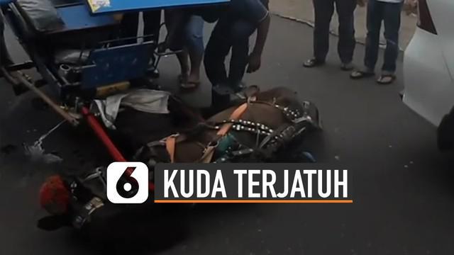 Beredar video seekor kuda delman terjatuh di tengah jalan. Diduga kuda itu mengalami kelelahan.