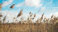 Ilustrasi angin, inspirasi. (Photo by Katarzyna Kos on Unsplash)