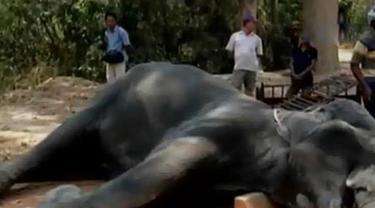 Perombak Nelayan hingga Gajah di Kamboja Mati Kepanasan