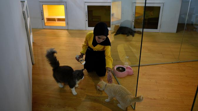 Seorang pengasuh merawat para kucing di hotel bintang lima khusus untuk kucing yang diberi nama CatZonia di Shah Alam, Kuala Lumpur, Malaysia, 6 Agustus 2018. Hotel Catzonia memiliki 35 ruang tidur yang bisa memanjakan para kucing. (AFP/Manan VATSYAYANA)#source%3Dgooglier%2Ecom#https%3A%2F%2Fgooglier%2Ecom%2Fpage%2F%2F10000