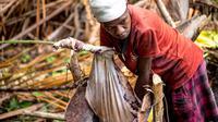Seorang warga Papua Barat sedang mengolah serabut rumbia menjadi sagu. (dok. Biro Komunikasi Publik Kementerian Pariwisata/Dinny Mutiah)