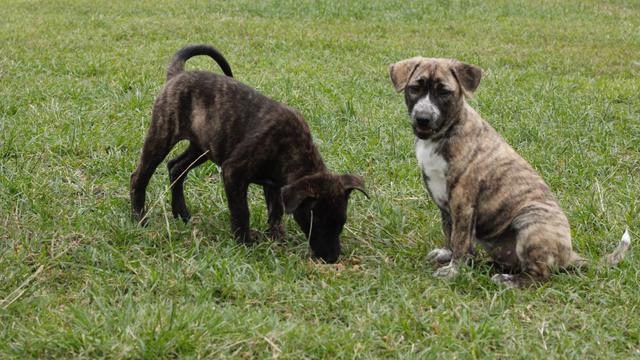 Bali mulai lakukan pelarangan konsumsi daging anjing