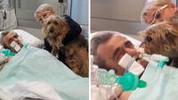 Setelah kisahnya membuat terharu, kini putrinya sekarang menganjurkan agar rumah sakit tersebut mengubah kebijakan mereka tentang melarang hewan peliharaan mengunjungi pemiliknya (buzzflare.com).
