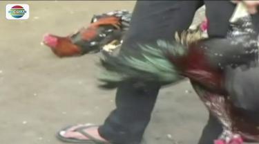Diduga sudah meresahkan warga, Polsekta Panakkukang, menggerebek sebuah tempat perjudian sabung ayam di Makassar, Sulawesi Selatan.