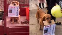Viral, Seekor Anjing Menangis Cari Sahabatnya yang Hilang. Sumber: whatsnew2day.