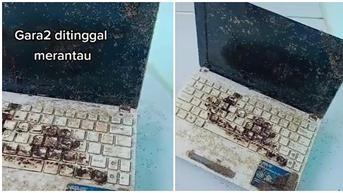 Lama Ditinggal, Kondisi Laptop Penuh Semut Ini Bikin Pasrah
