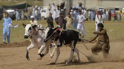 Para penonton menyaksikan dan bersorak-sorai saat para petani berlomba dengan sapi jantan mereka dalam kompetisi balapan sapi tradisional di pinggiran Islamabad, Pakistan, Minggu (27/6/2021). Ditengah pandemi covid-19, balapan sapi ini disaksikan banyak penonton. (Farooq NAEEM/AFP)