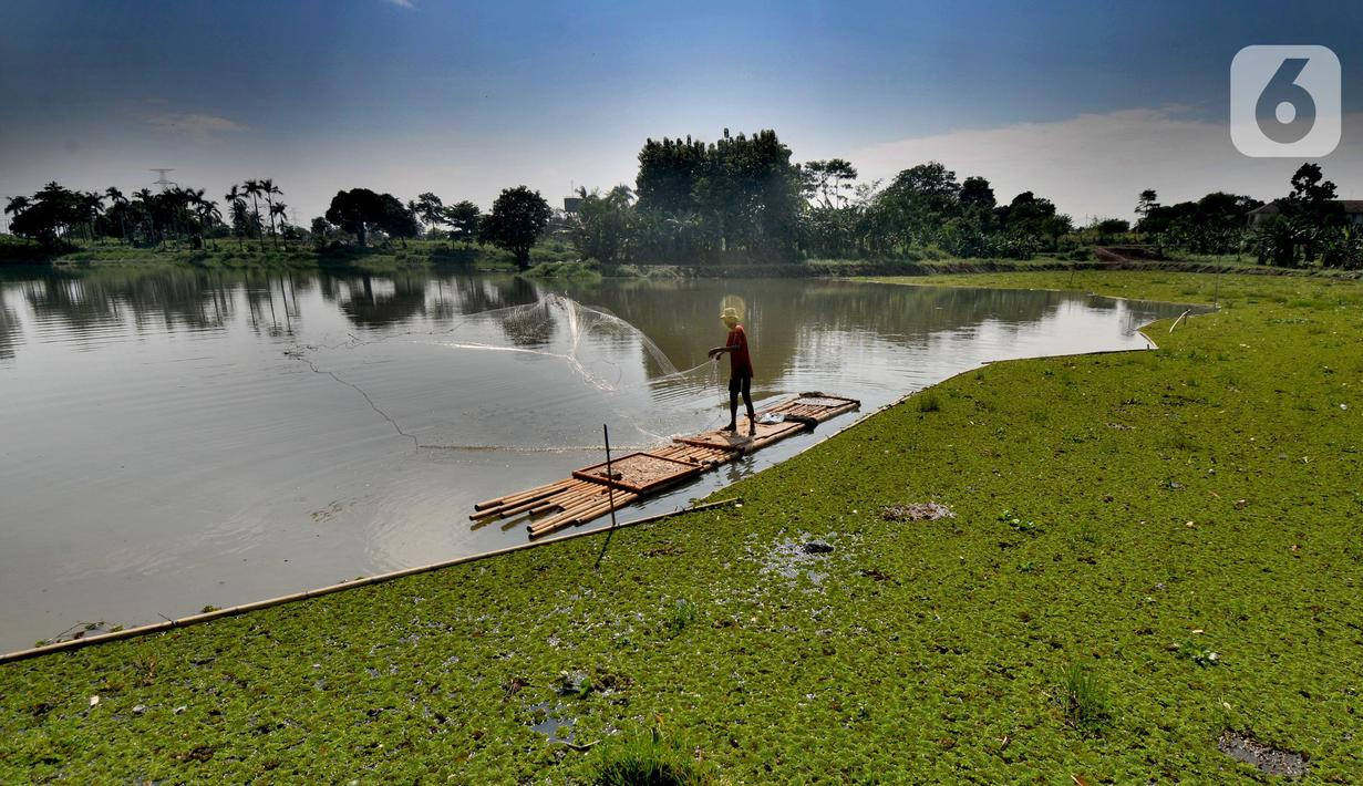 Warga menjala ikan pada bagian situ yang dipenuhi gulma di Situ Tujuh Muara, Depok, Jawa Barat, Senin (20/9/2021). Situ Tujuh Muara yang awalnya luasnya 30 hektar kini menyusut 24 hektar dengan sebagian sisinya dipenuhi tanaman gulma dan endapan lumpur. (merdeka.com/Arie Basuki)