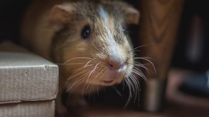 Cara Membasmi Tikus (sumber: Unsplash)